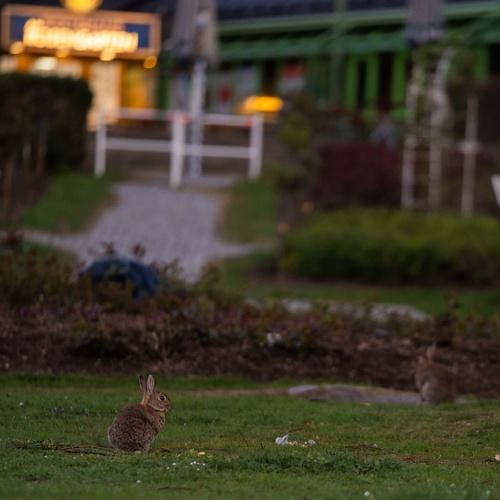 Wildkaninchen im Park © PantherMedia / josef.hajda.de