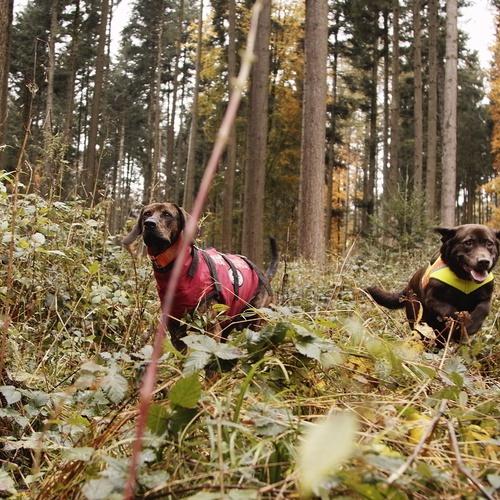 Jagd mit Hunden, Berufsjäger