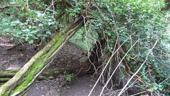 Totholz Wildtierlebensraum Wald